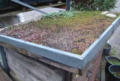 Pflanzen Dachbegrünung Gartenbau Landschaftsbau Erftstadt Köln