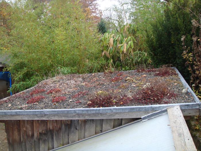 Pflanzen Dachbegrunung Gartenbau Landschaftsbau Erftstadt Koln