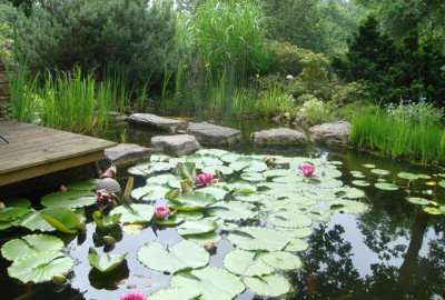 Wasser Teich Gartenbau Landschaftsbau Erftstadt Köln